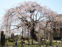 三番目の桜。 ここは数年前に来ました。