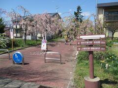 日中線の桜の遊歩道はほぼ南北に垂直に約3km続いています。 ここは駅から西へ徒歩5分ほどの遊歩道最南端の「起点」です。  私は実際にはお宿に荷物を預けて、その足で市役所通りを真っ直ぐ西に進んで遊歩道の中間地点に近い交差点から散策を始めたのですが、やっぱり「起点」と言われる所はどんな様子か見てみたかったんです。 なので、片道約580mの道を往復することになるのですがここまでやって来ました。