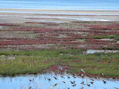 能取湖。サンゴ草。 9月下旬なので、もう終わりかけでしょうね。