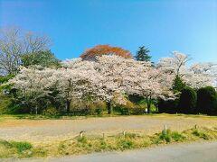 春になると花見の会場として人気です。
