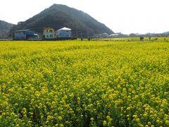 宿をチェックアウトし、車で移動。下田を過ぎた先にある南伊豆町の「元気な百姓の花畑公園」と名付けられた場所では、菜の花が満開。