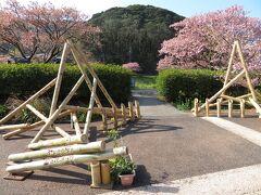 菜の花畑から青野川上流にある「みなみの桜と菜の花まつり」会場へ。
