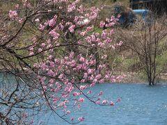 少し上がって、八汐湖につきます。ダム湖ですが、なかなか風光明媚な湖で、少しぷらぷらしてみます。魚釣りを楽しんでいる方もいらっしゃいました。