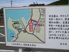 現地情報を得ようと、因島フラワーセンターへ。。。 馬神除虫菊畑が分かりやすそうです。