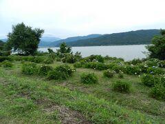 『余呉湖あじさい園』は余呉湖の西岸にあり、湖の風景をバックにあじさいが見られるスポットです。
