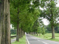 このメタセコイヤ並木は2.4kmも続いています。