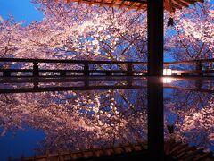 春のライトアップ~桜の疏水・三井寺~