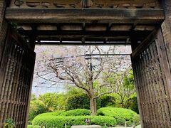 うおおおぉぉ! こちらの枝垂れ桜を見ると JR東海の「そうだ京都、行こう。」のテーマソング 「My Favorite Things」の曲とともに 門が開かれていくシーンがよみがえるわぁ