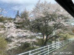 黒川温泉に到着。 こんなにも、桜の木が多かったなんて、知りませんでした。