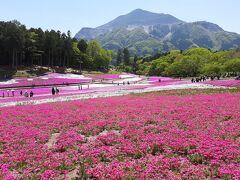 武甲山と芝桜。  武甲山、セメントのためか山がどんどん切り取られている感じですね。 秩父を象徴する山だと思うのですが、これでいいのでしょうかね。