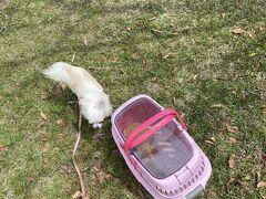 ネットで調べたら、小型犬はキャリーケースなどに入れての入場可とのことで、
