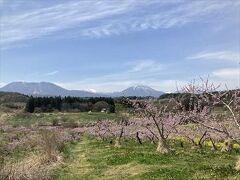 桃の花ですかね。