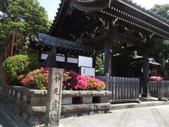 ツツジの花が満開です。緑の墳丘、日本庭園の松の木は見ごたえありました。南谷檀林跡の碑もありました。