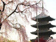 旅館しみずさんのご主人のご案内は続くのですが…。 早朝の「東寺」を歩き参拝したいので、途中で下ろして頂きました。 ご案内下さり、ありがとうございました!  支柱が入り込んでも、五重塔はいつ見ても本当に美しい姿(#^^#)