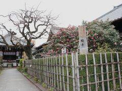 西大路通りから一条通へ曲がったところにある小さな「地蔵院」は、別名「椿寺」 こちらは「ことりっぷ」の地図には載っていません。 「京都の地蔵院」で検索すると沢山の「地蔵院」がヒットし、一番有名なのは西京区にある「地蔵院」のようです。
