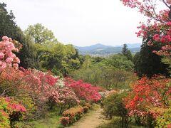つつじ公園は山になっていて満開のつつじの中を登ってきます。 向うに見える山は加波山でしょうか。