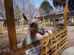 奥宮からさらに奥に動物園があります。