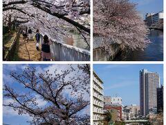 子供たちが遊んでいる牡丹町公園。 ここにも桜があり、ママさんたちが花見をしているのだが、 その公園と大横川をつないでいる 古石場川親水公園なども歩いてみる