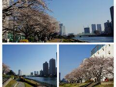 対岸は越中島公園  晴海運河の反対側を歩く  こちら側にも桜並木があり、 さらに穴場の桜花見スポットと見受けられる