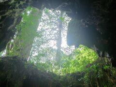 【屋久島 ウィルソン株】 鹿児島  2013年8月  切り株が腐って、空洞になっていますね…  見上げる角度によってハート型に見えますね…