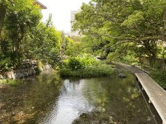 楽寿園を出て、源兵衛川。 こちらも富士山の湧水で、水がとても澄んでいます。