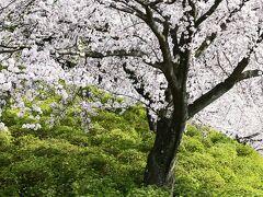 西山公園何処も桜満開。
