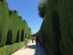 今日は、メインのアルハンブラ宮殿の観光です。2回目の観光ですが、10年以上前なので新鮮な気持ちで観光できました。いい天気でかなり暑かったです。