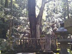 毛利元就公の墓所。 逆光のため全体を写真に収めるのが困難である。石柱の背後に大きな木が生えている。 石塀の前へ行き合掌外する。