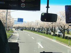 青森空港から、バスで、弘前市内に向かう途中、桜並木が見える。