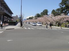 弘前市役所前の「桜並木」。