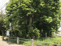 お次は笹野台緑地です。