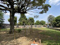 地図のすぐわきに何やらポスターが張られ 最近見たような文字が 「あれま、今年の大河ドラマの渋沢栄一墓所」 ここにあったんですか 大きな木と広い敷地のはるか向こうに立派なお墓が何基か経っています。