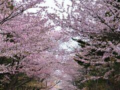 表参道に到着しました。  北海道神宮の社殿が 建てられたのは、明治4年。 現在、四柱(よはしら)の神様が お祀りされています。  ・大国魂神  北海道の国土の神様 ・大那牟遅神 国土経営・開拓の神様 ・少彦名神  国土経営・医薬・酒造の神様 ・明治天皇  近代日本の礎を築かれた天皇