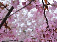 そうして最後は、 地下鉄東豊線「豊平公園」駅で下車。  豊平公園は、庭園散策が楽しめる 花と緑の公園です。