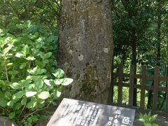 参道には芭蕉の句碑もありました。  「梅が香にのつと 日乃出る山路哉 はせを」