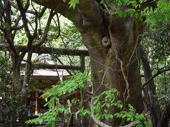 巨大な御神木・榎の奥に鳥居と本堂が見えます。  鳥居のすぐ脇には井戸も。