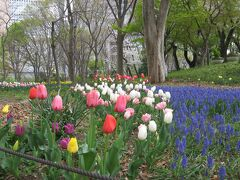 早大に補欠合格できましたので、慌てて部屋さがしに来た前回(3月28日)は新宿中央公園に立ち寄りました。