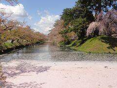追っ手門近くの「桜」。