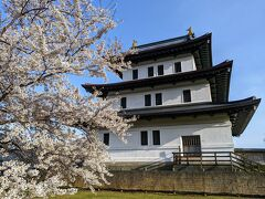 染井吉野と松前城。