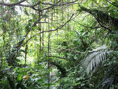 昼食後も妹に連れられるがまま伊良部島の知る人ぞ知る 観光スポット(?)を巡ります。 こんな森の中へと足を踏み入れます・・・