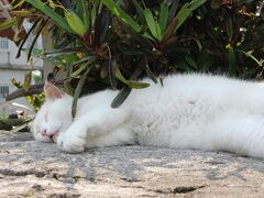 伊良部島から宮古島へ移動しました。 妹のアパート近くの漲水御嶽へ二年ぶりのお詣りをします。 石垣の上には白猫がお昼寝中Zzz