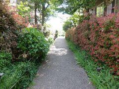 鎌田前耕地緑道の岡本公園側入口.  鎌田前耕地緑道は両側に多彩な花があり,楽しい散策になりました.以下,花の写真が多数になるのですが,興味がなければ飛ばしてください.
