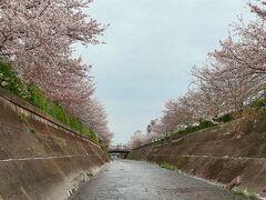 生田川公園   生田川沿いに約150本の桜並木があり,「ぬのびき花街道」と呼ばれ,満開時には「生田川さくらまつり」が開かれる。