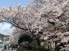 宇治川公園   山の手小学校の北側に隣接。六甲山系の麓から現れ,神戸市中央区を南北に流れていく宇治川(うじかわ)。その名前は,平安時代の辞書・和名類聚抄にも記された「宇治郷」という地名に由来する