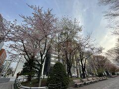 大通公園の桜がきれいに咲いてました^^