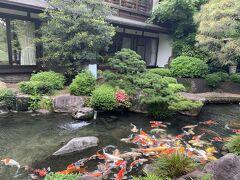 廻遊式日本庭園。  鯉の餌やり体験ができます。  スタッフがどうぞ、と枡に入った餌を渡してくれました。