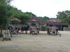 新田観光さんコロナ禍で牛車需要減か。