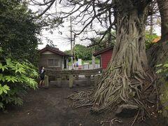 島の反対側 黒神埋没鳥居へ  昔の噴火でこんなに埋まっちゃたんだって。
