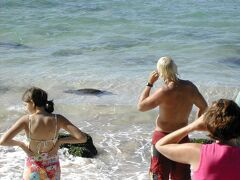 【2005年】ラニアケアビーチ  ラニアケアビーチではウミガメを見ました。 人間のすぐ近くで泳いでいました。  私は2000年ハワイ島でウミガメを見ていますが、母は初めて♪ 色々と行けて楽しいツアーでした。