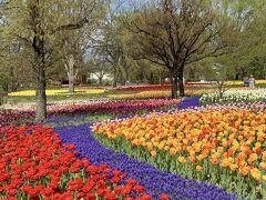ホテルへ行く前に安曇野の国営公園でチューリップのお花見散歩しました。